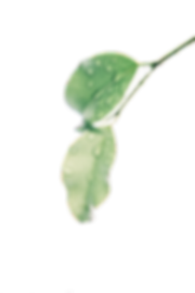 blur-botany-clean-1650627.png