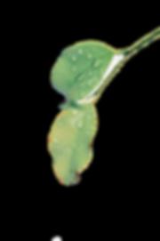 blur-botany-clean-1650627.png