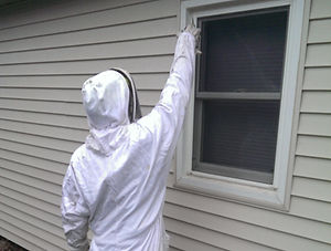 Bee / Wasp Exterminator