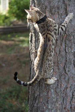 chat en liberté