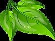 blätter grün A4_Blätter_free.png
