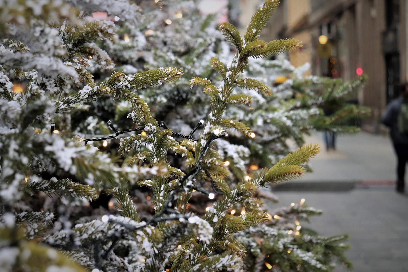 Schneebedeckter Tannenbaum