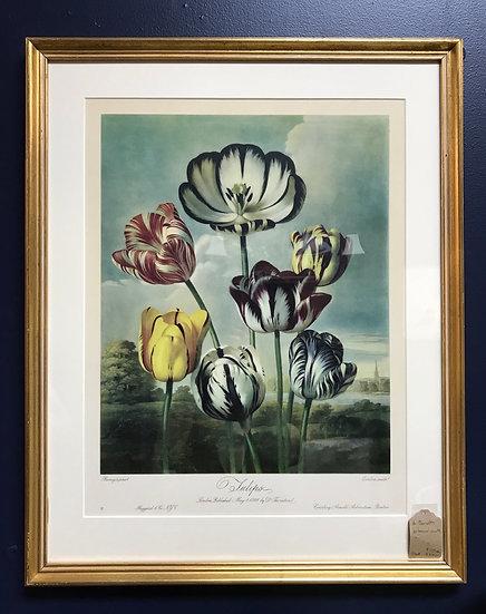 """Tulips"" by Dr. Thornton, Botanical Print"