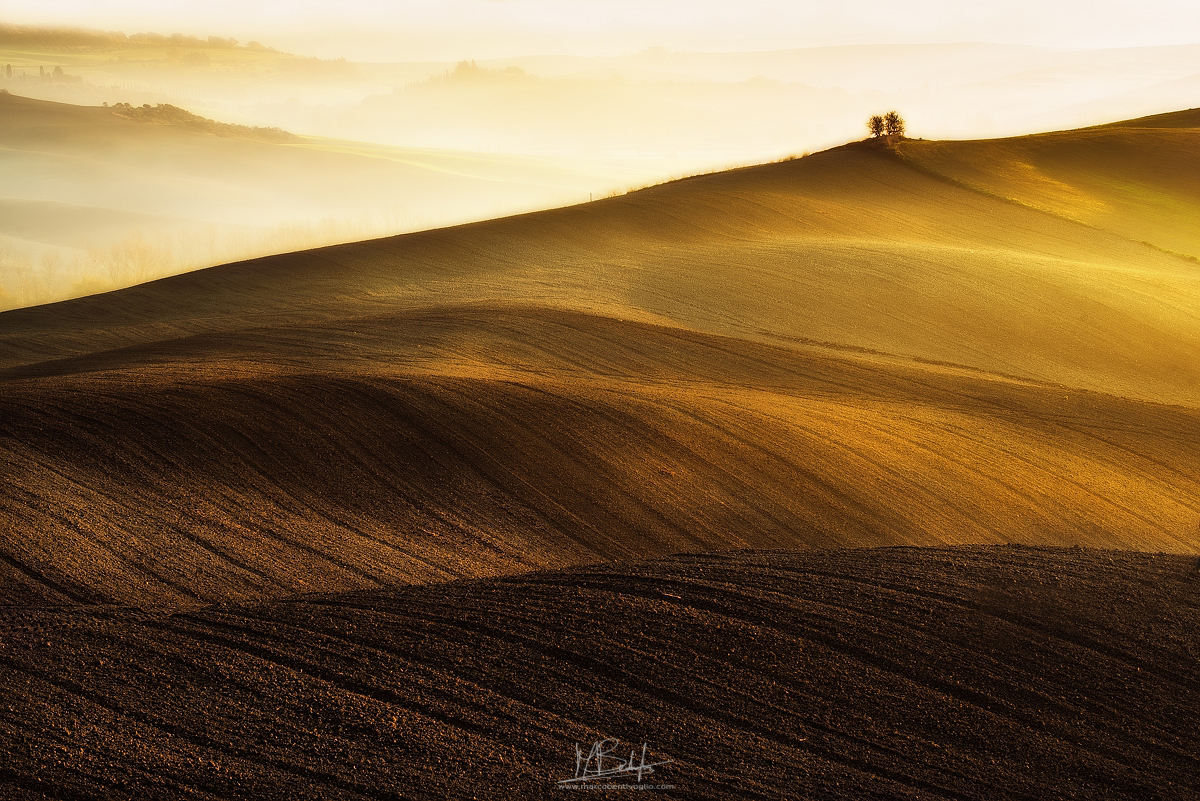 """The golden hills"""