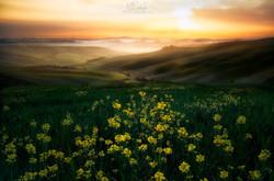 """""""Tuscan spring"""""""
