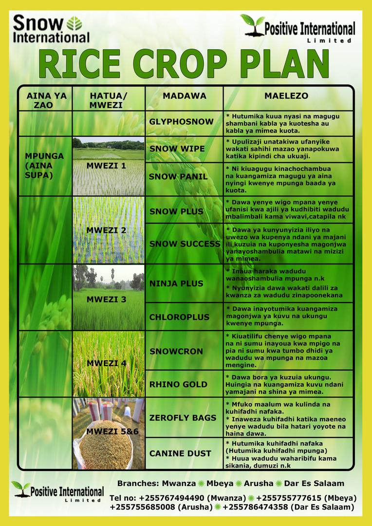 Rice Crop Plan