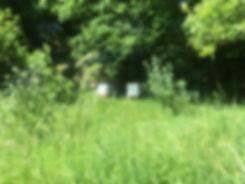 WBC in meadow .JPG