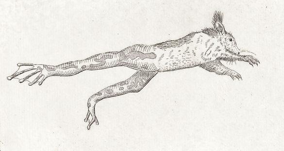 _Hörnchenspringer.jpg