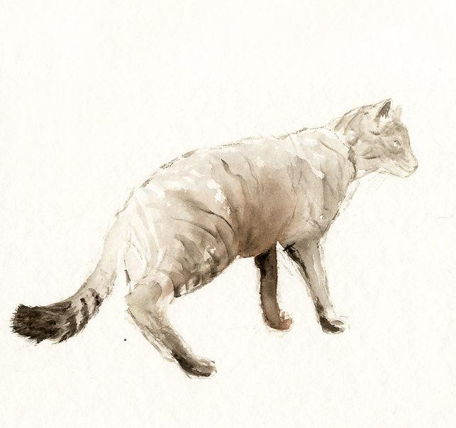 Wildkatze.jpg