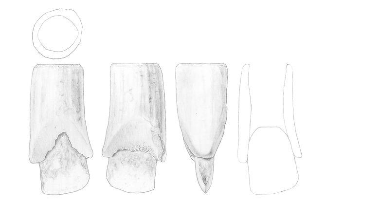 Steinbeil Bleistift Kopie.jpg