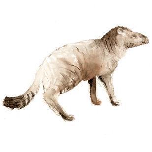 Wildkatzentapir.jpg