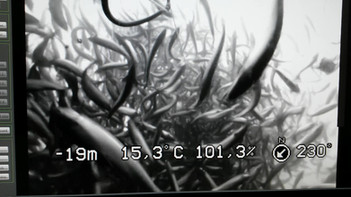 Sub-feeder fôrer fisk (3).mp4