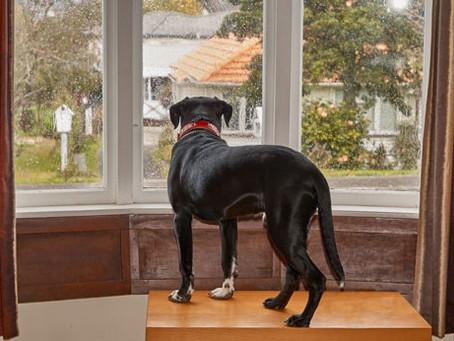 Jenny Harlow Separation Anxiety Dog Training Specialist