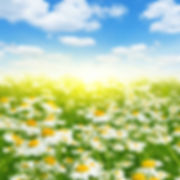 bigstock-Summer-landscape-with-daisy-fi-