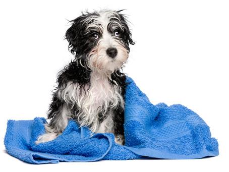 The Giant Dog Wash, Kempsey