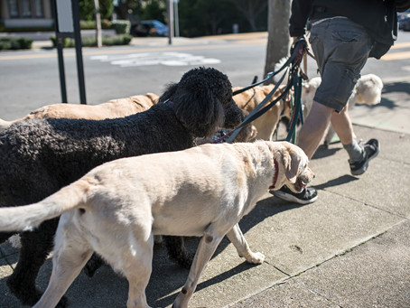 Hierarchy Amongst Dogs… Debunk the debunkers