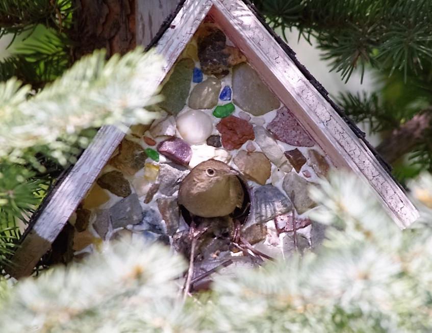 Aspen Crossing - Perfect Birdwatching