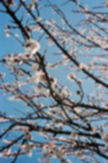 5_Spring2019_LuciaGaspari.jpeg