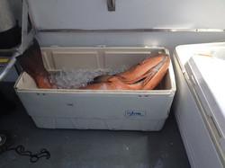 Spearfish West Palm Beach