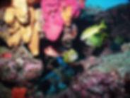 Breakers Reef Scuba WPB