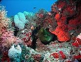 Green Moray Scuba Dive