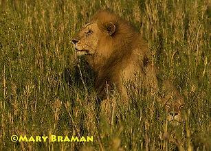 Braman Africa 2017-1A.jpg