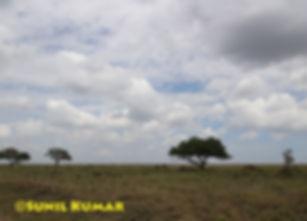Serengeti view.jpg