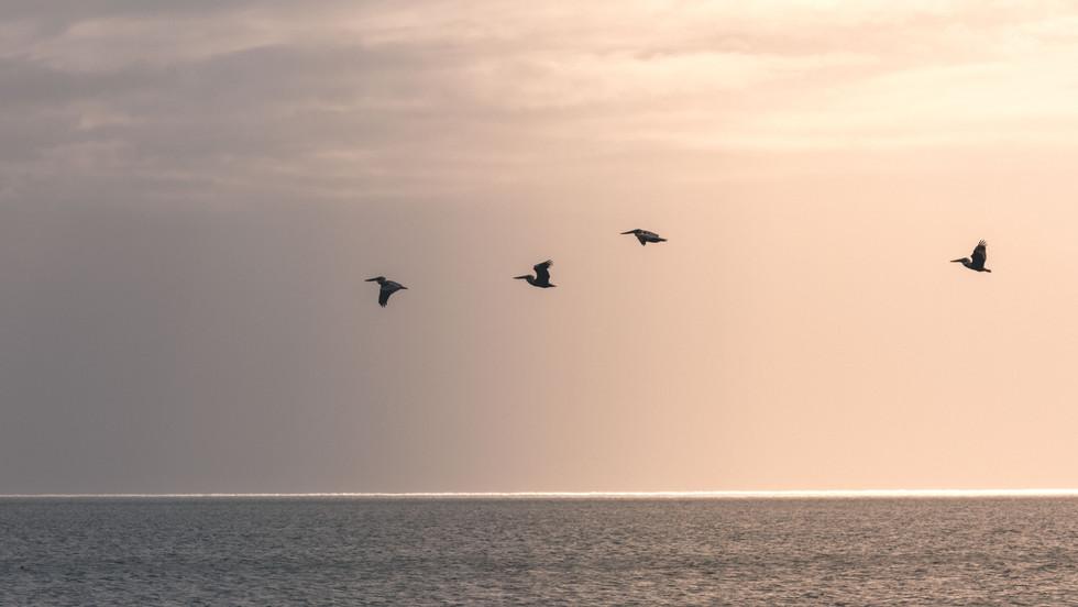 Gulf Coast3.jpg