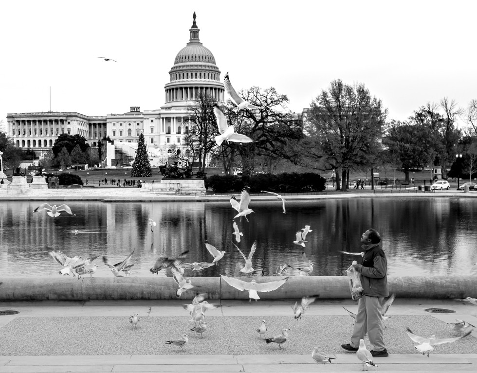 the capitol black and white