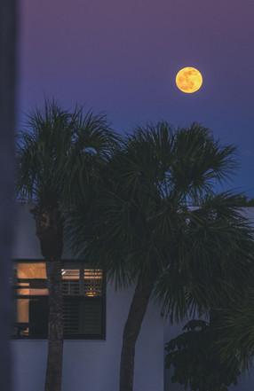 Gulf Coast9.jpg