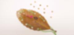Thread a Leaf.png