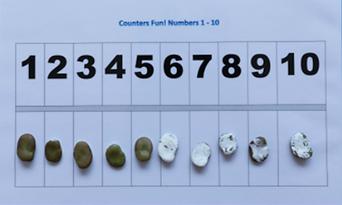 Broad Bean Math.png