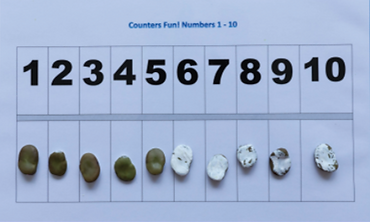 Broad Bean Math