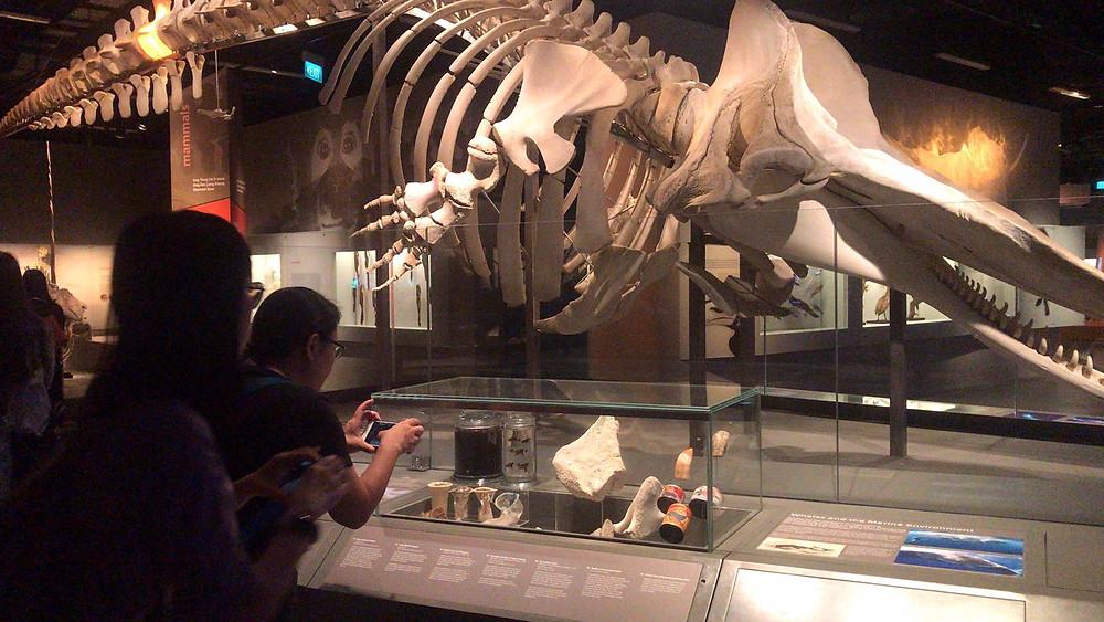 Lee Kong Chian Natural History Museum Dinosaurs