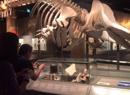 Educator's Preview at Lee Kong Chian Natural History Museum