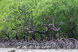 cora-mangroves-04.jpeg