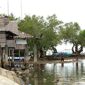 cora-womangroves-brgy-sabang-baybay-leyt
