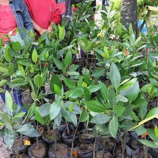 cora-womangroves-baybay-leyte-05.jpg