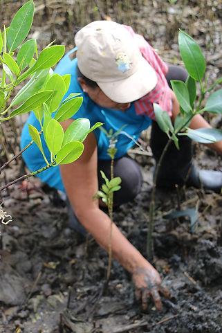 cora-womangroves-baybay-leyte-06.jpg