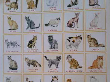 Most popular breeds of cat in the UK