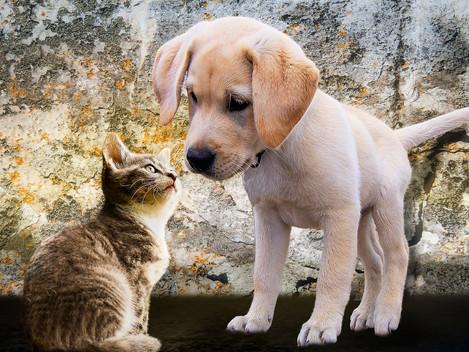 Obrigatoriedade de Registo   Cães, gatos e furões
