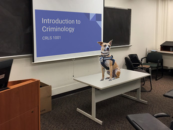 Nattie to teach criminology in the Fall