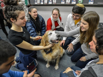 OP-ED: Marquette snowflakes need to pet dogs to get through exams? Back in my day we didn't even hav