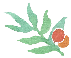 Plant_19_edited.png