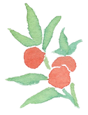 Plant_29.png