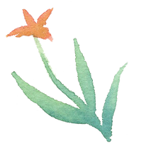 Plant_34.png