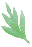 Plant_37_edited.png