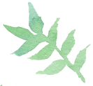 Plant_09_edited.png