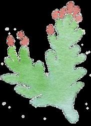 Plant_28_edited_edited_edited.png