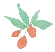 Plant_10.png
